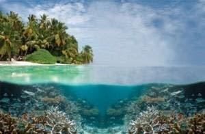 Tubbatha Reef National Marine Park