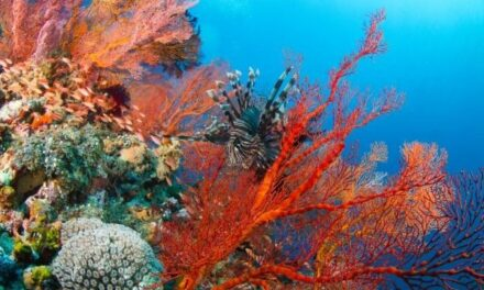 85% of 'Coral Triangle' reefs at risk