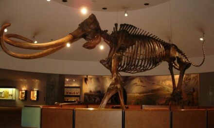 Fall events at the Natural History Museum and Page Museum at the La Brea Tar Pits