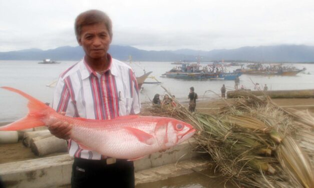 EU says PHL, PNG face import ban over illegal fishing